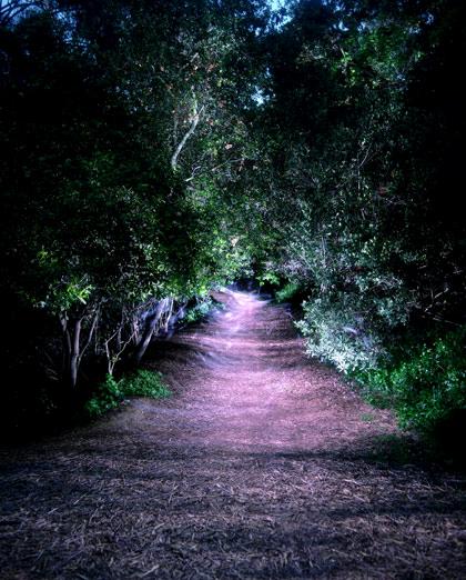 art blog - dean chamberlain - empty kingdom