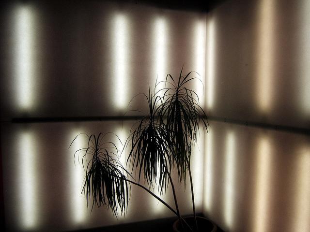 art blog - Elizabeth Ryan Hoeckel - empty kingdom