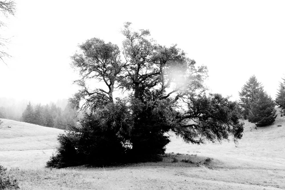 art blog - Calvin Ma - empty kingdom