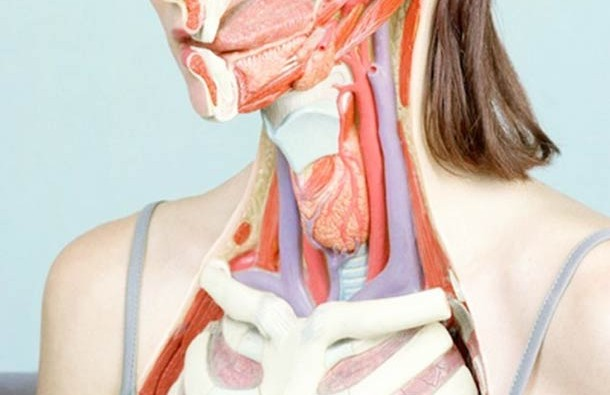 Woman-Anatomy-by-artist-Koen-Hauser-3