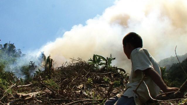 1_e_Adam-Wakeling-_Up-in-Smoke