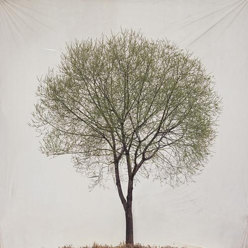 art blog - Myoung Ho Lee - empty kingdom