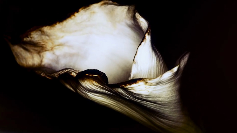 Art Blog - Oxyde Noir - Empty Kingdom