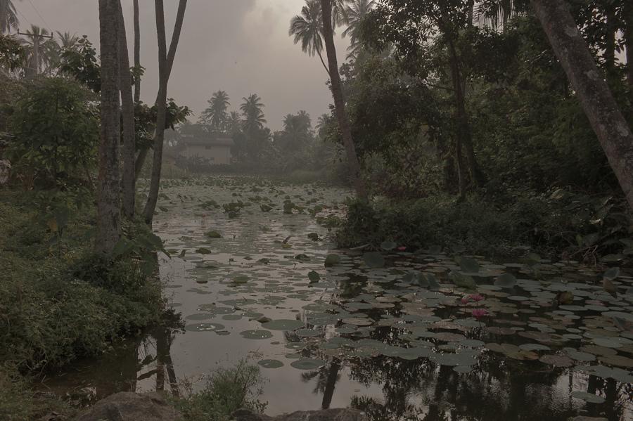 Bart Pogoda - Empty Kingdom - Art Blog