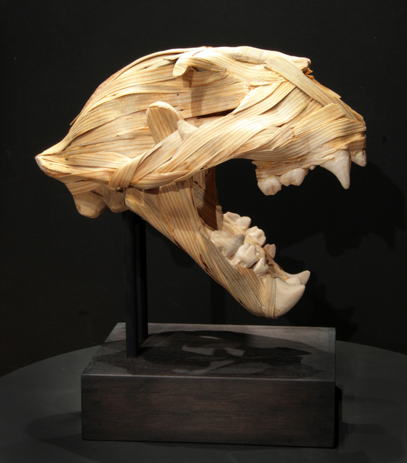 MichaelAlm_North American Cougar (puma concolor cougar)