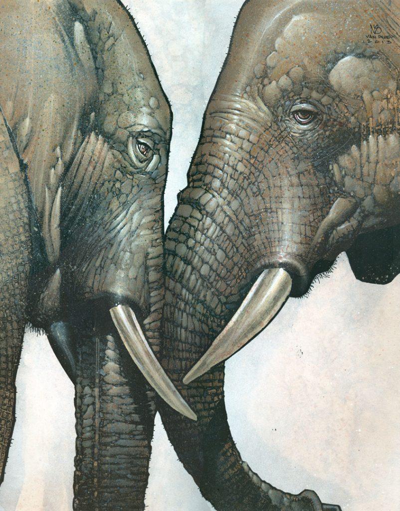Elephants_ASJ